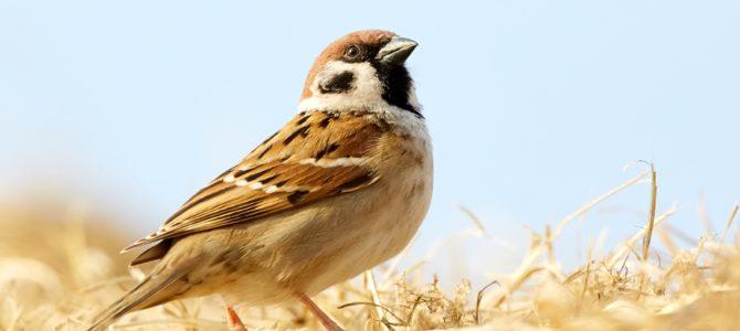 Акция: «Поможем зимующим птицам»